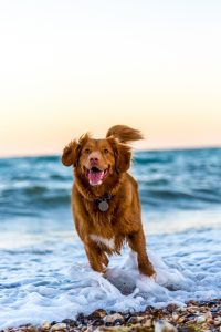 dog running at beach