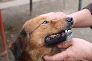 happy dog teeth