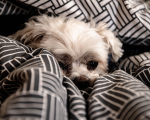 small older dog