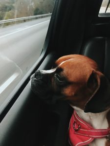 car travel with dogs