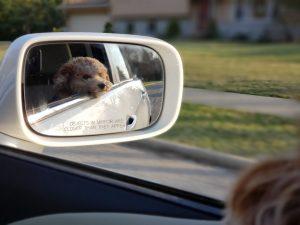 cute dog in car mirror